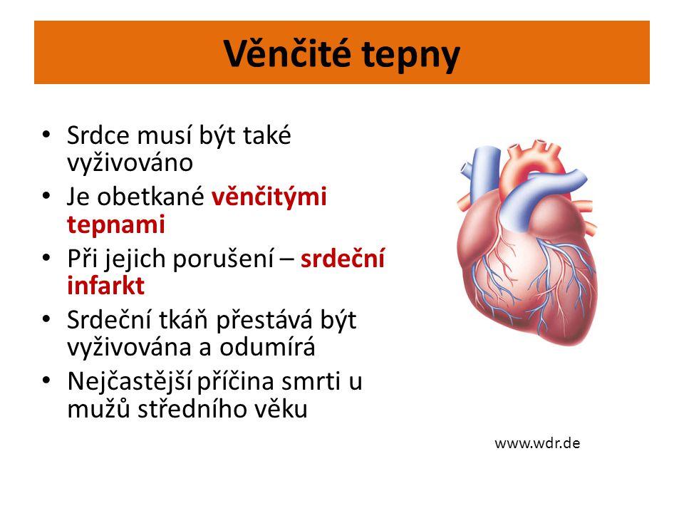 Věnčité tepny Srdce musí být také vyživováno
