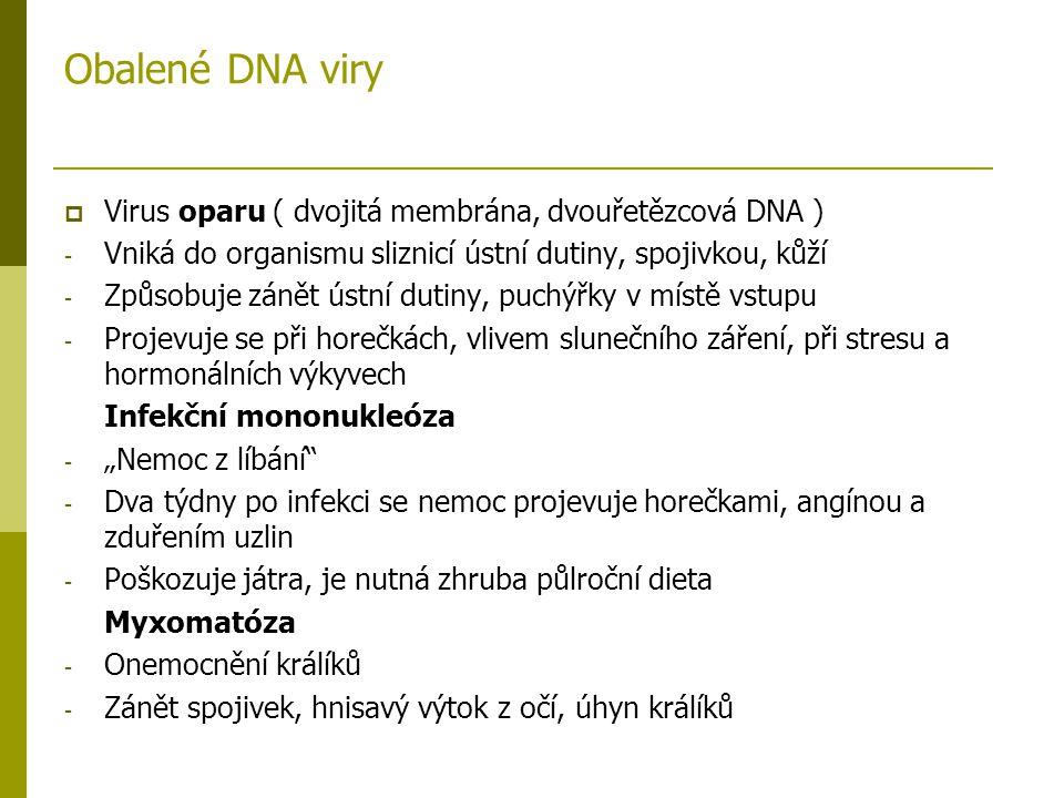Obalené DNA viry Virus oparu ( dvojitá membrána, dvouřetězcová DNA )