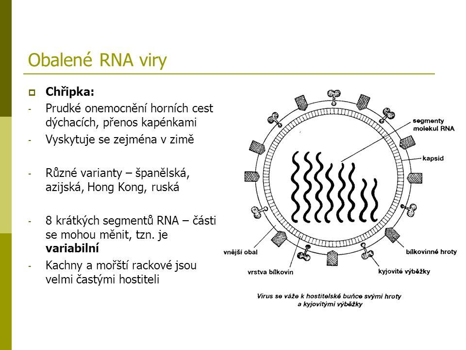 Obalené RNA viry Chřipka: