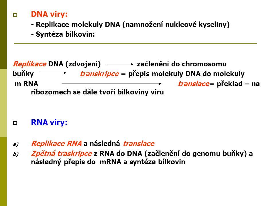 DNA viry: - Replikace molekuly DNA (namnožení nukleové kyseliny) - Syntéza bílkovin: