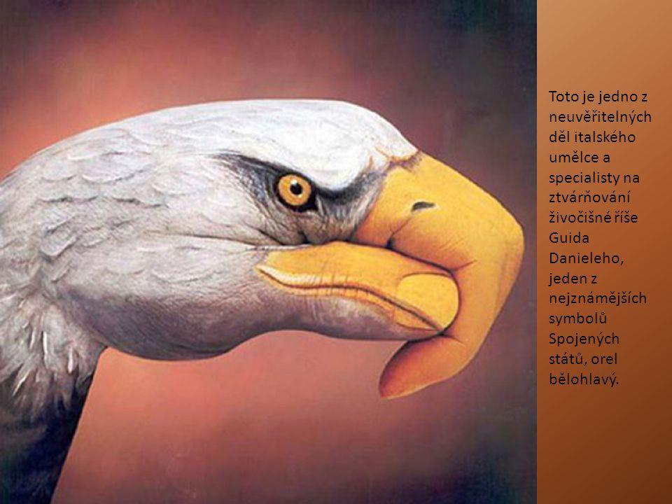 Toto je jedno z neuvěřitelných děl italského umělce a specialisty na ztvárňování živočišné říše Guida Danieleho, jeden z nejznámějších symbolů Spojených států, orel bělohlavý.