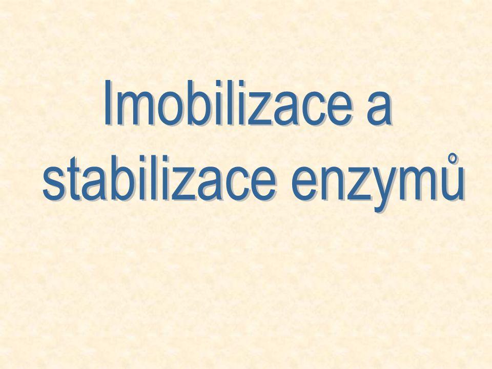 Imobilizace a stabilizace enzymů