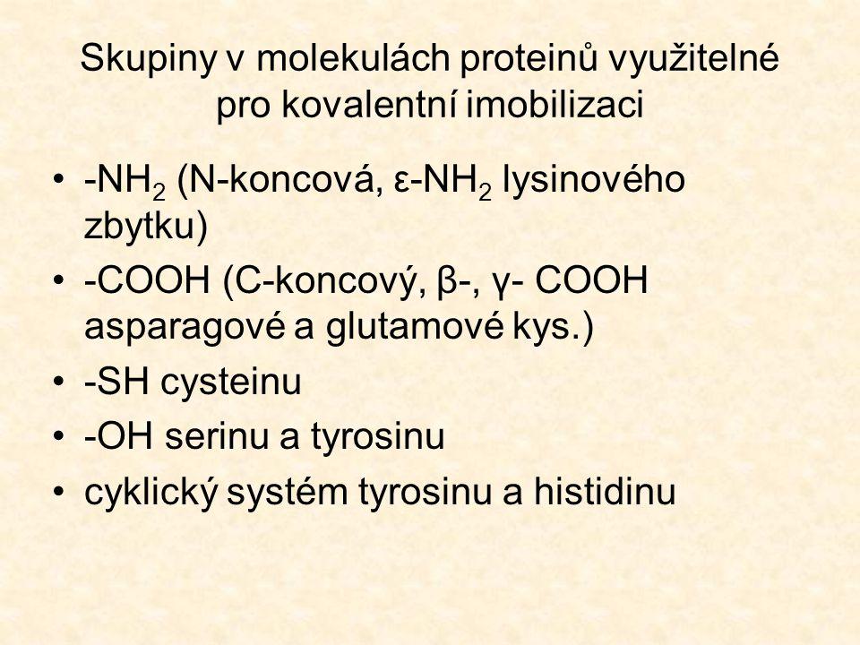 Skupiny v molekulách proteinů využitelné pro kovalentní imobilizaci