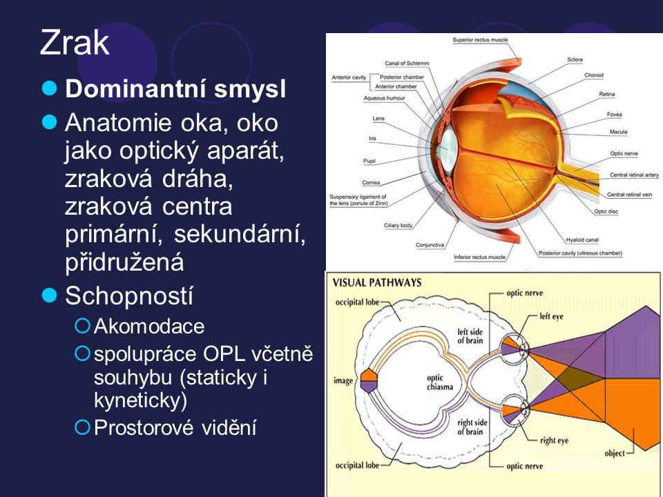 Zrak Dominantní smysl. Anatomie oka, oko jako optický aparát, zraková dráha, zraková centra primární, sekundární, přidružená.