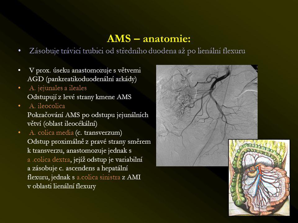 AMS – anatomie: Zásobuje trávicí trubici od středního duodena až po lienální flexuru. V prox. úseku anastomozuje s větvemi.