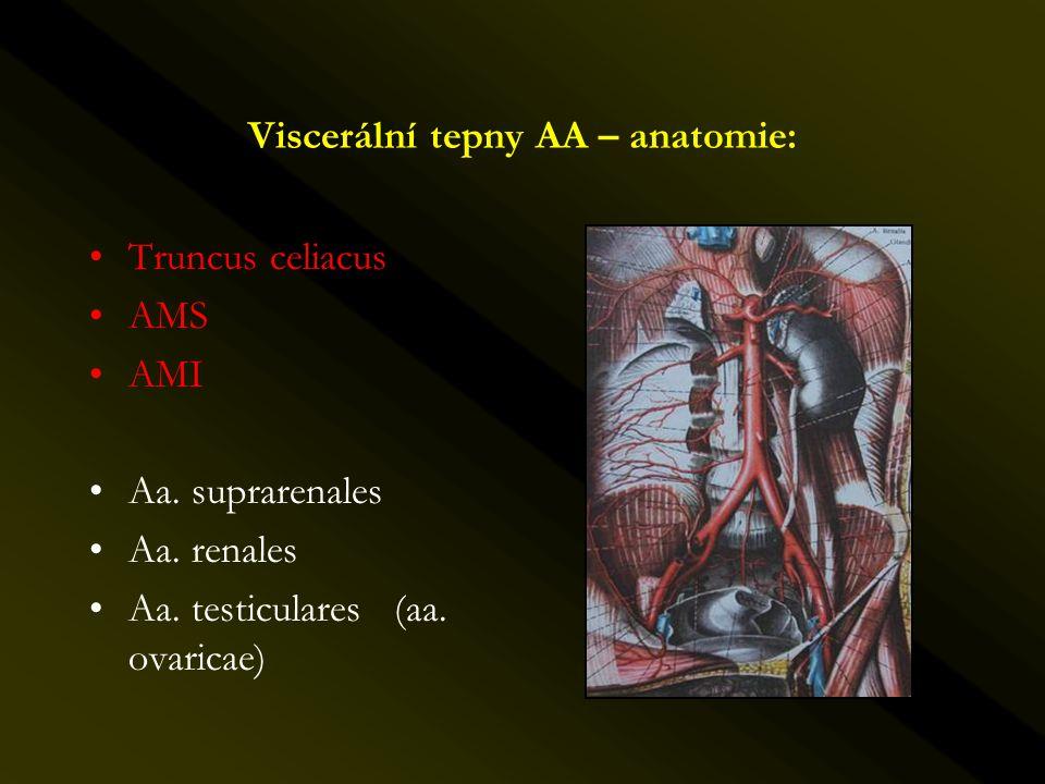 Viscerální tepny AA – anatomie: