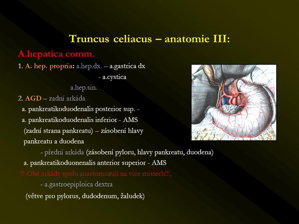 Truncus celiacus – anatomie III: