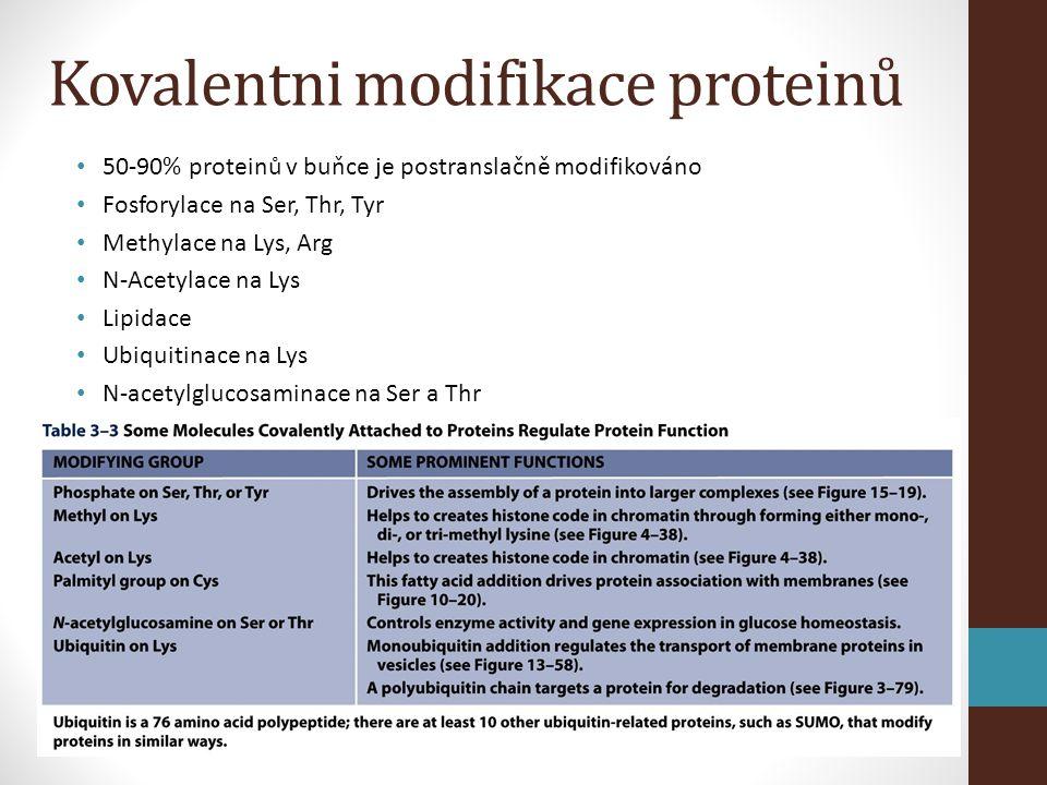 Kovalentni modifikace proteinů