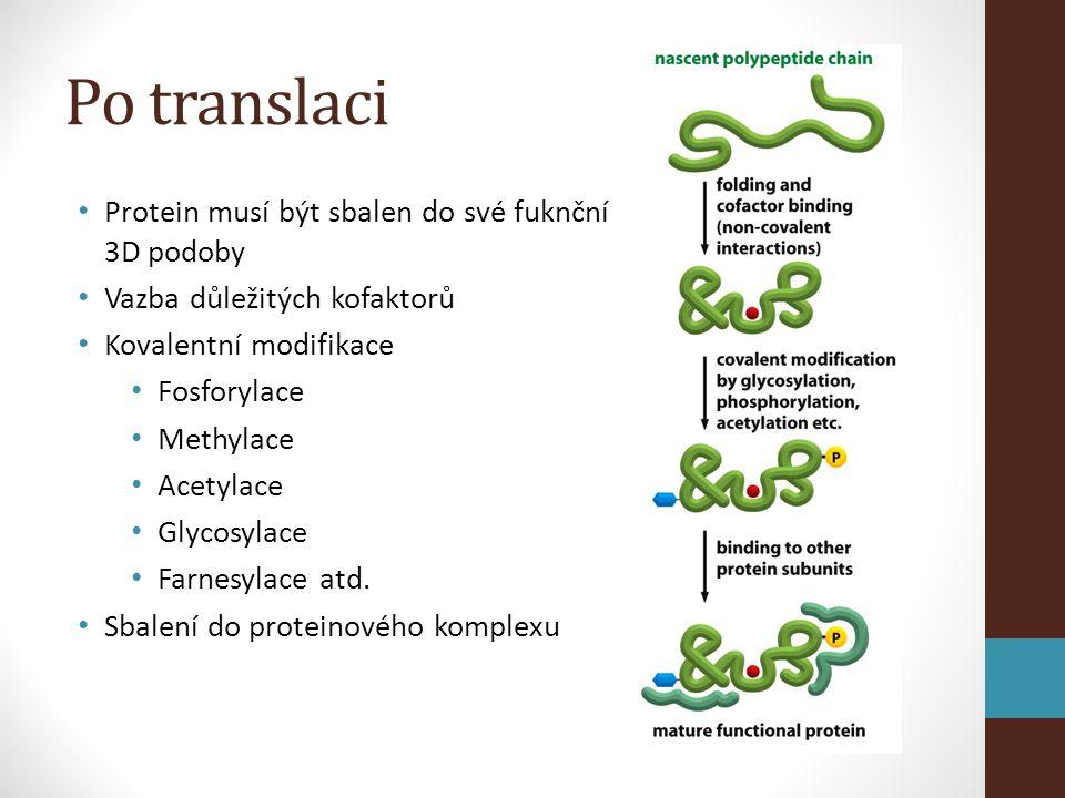 Po translaci Protein musí být sbalen do své fuknční 3D podoby