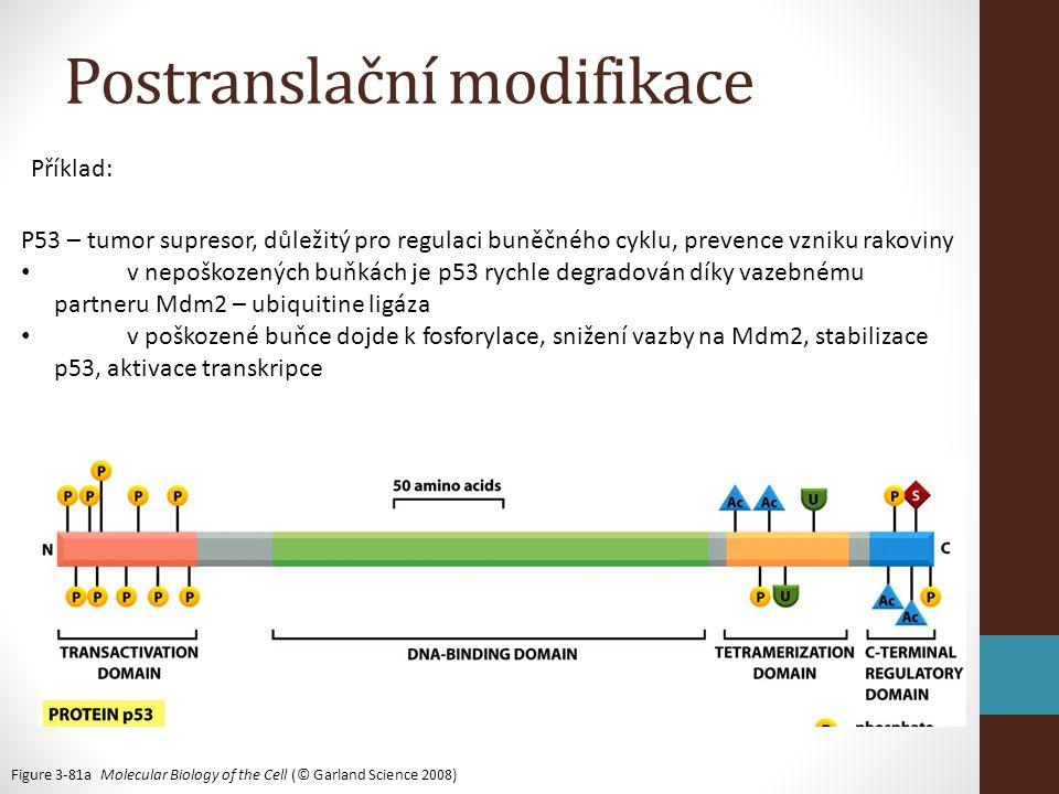 Postranslační modifikace