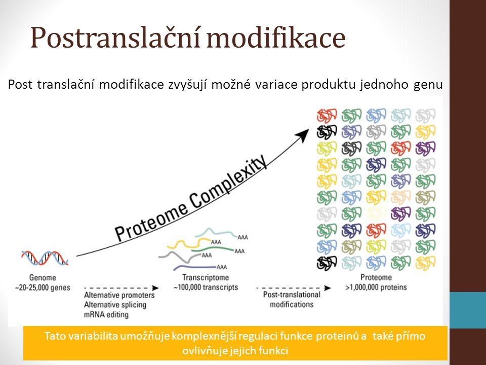 Post translační modifikace zvyšují možné variace produktu jednoho genu