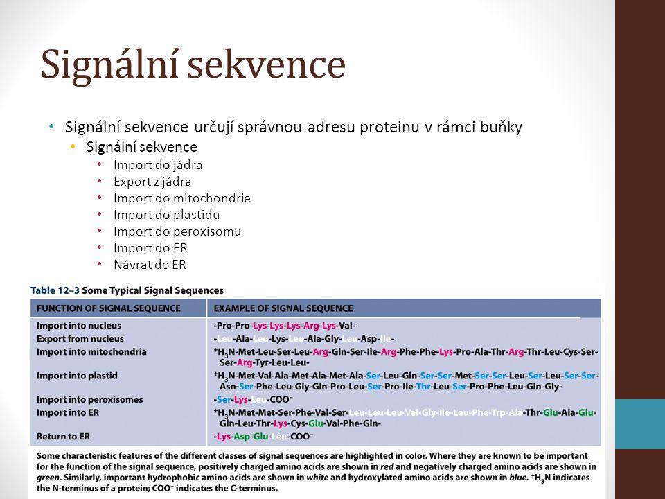 Signální sekvence Signální sekvence určují správnou adresu proteinu v rámci buňky. Signální sekvence.