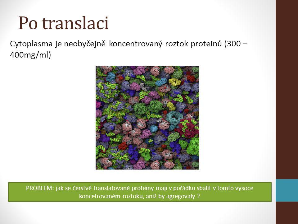 Po translaci Cytoplasma je neobyčejně koncentrovaný roztok proteinů (300 – 400mg/ml)