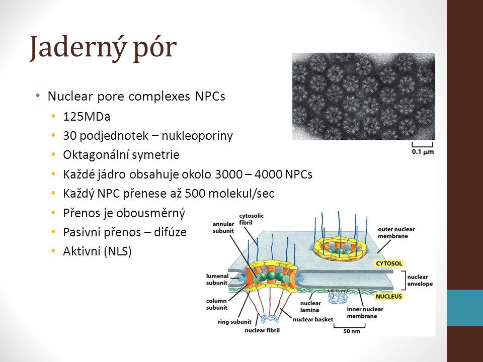 Jaderný pór Nuclear pore complexes NPCs 125MDa