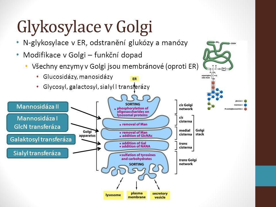 Galaktosyl transferáza