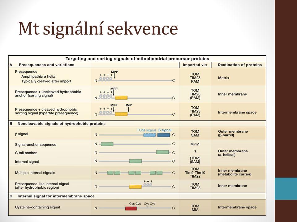 Mt signální sekvence