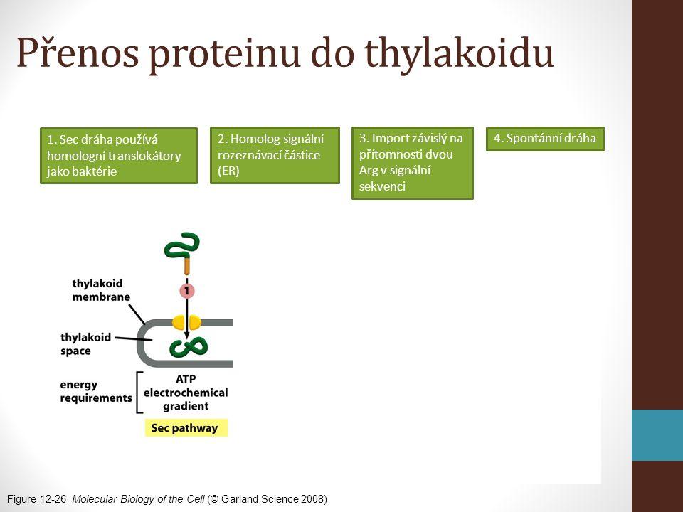 Přenos proteinu do thylakoidu