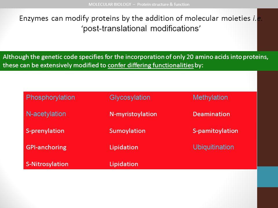MOLECULAR BIOLOGY – Protein structure & function