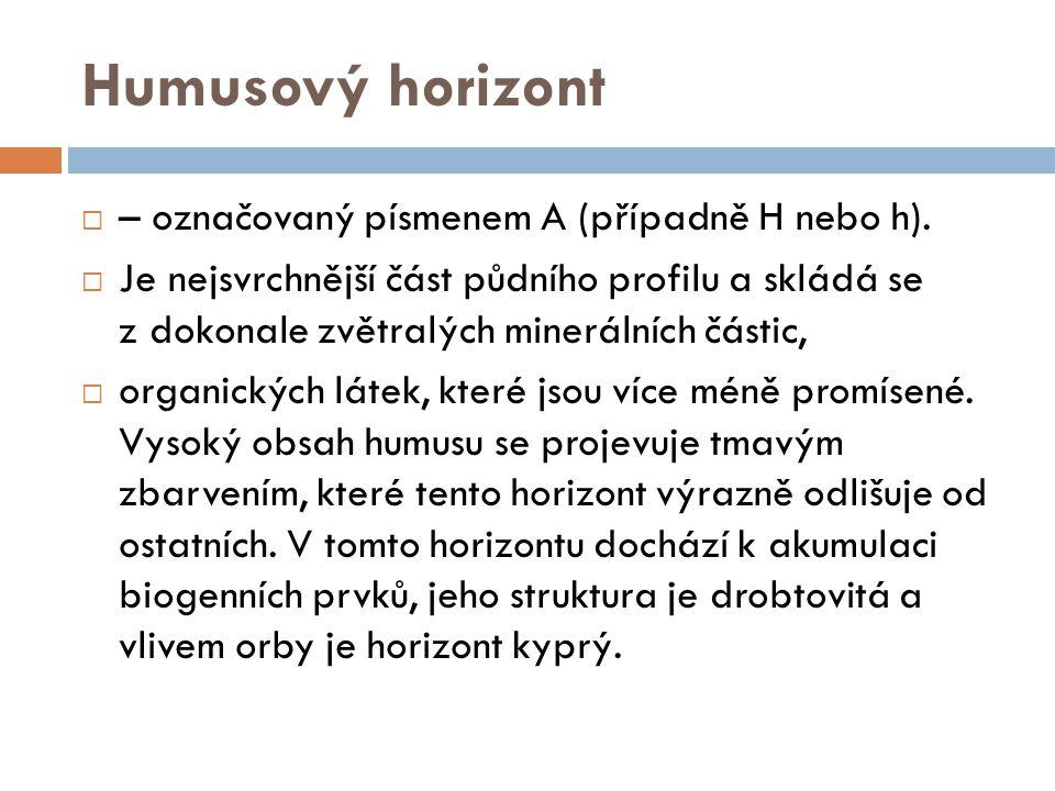 Humusový horizont – označovaný písmenem A (případně H nebo h).