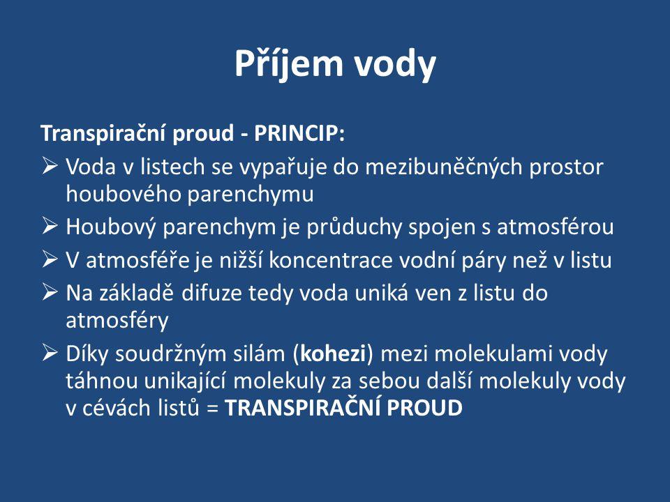 Příjem vody Transpirační proud - PRINCIP: