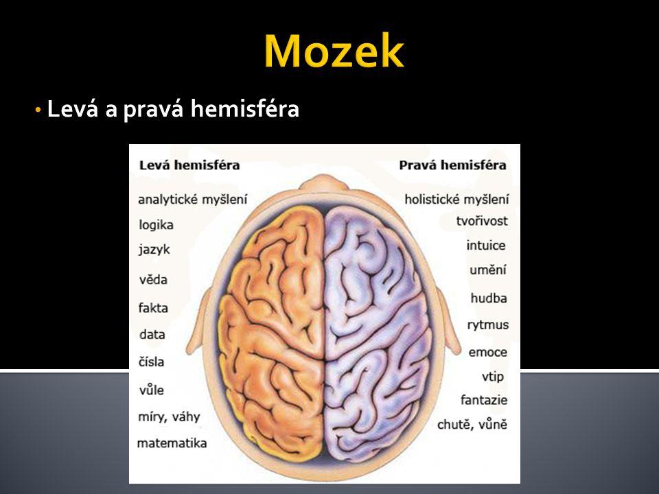 Mozek Levá a pravá hemisféra
