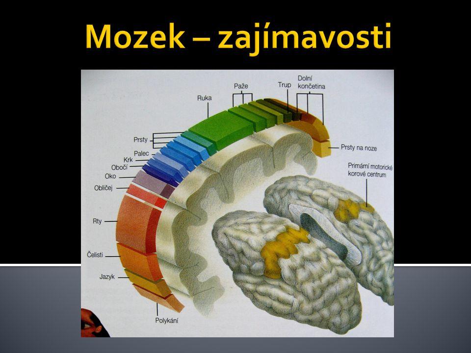 Mozek – zajímavosti