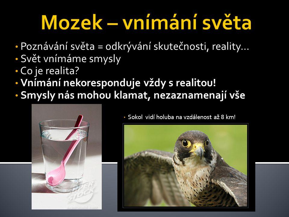 Sokol vidí holuba na vzdálenost až 8 km!