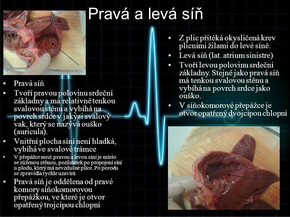 Pravá a levá síň Z plic přitéká okysličená krev plicními žilami do levé síně. Levá síň (lat. atrium sinistre)