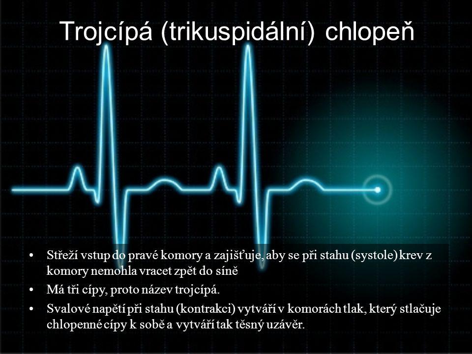 Trojcípá (trikuspidální) chlopeň