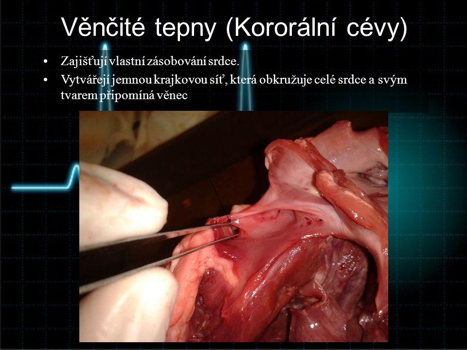 Věnčité tepny (Kororální cévy)