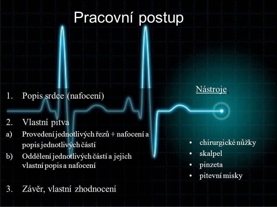 Pracovní postup Nástroje: Popis srdce (nafocení) Vlastní pitva
