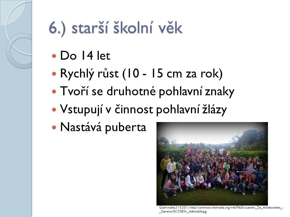 6.) starší školní věk Do 14 let Rychlý růst (10 - 15 cm za rok)