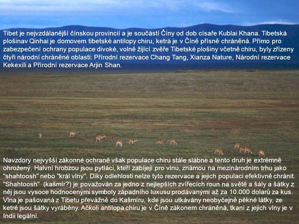 Tibet je nejvzdálanější čínskou provincií a je součástí Číny od dob císaře Kublai Khana. Tibetská plošinav Qinhai je domovem tibetské antilopy chiru, ketrá je v Číně přísně chráněná. Přímo pro zabezpečení ochrany populace divoké, volně žijící zvěře Tibetské plošiny včetně chiru, byly zřízeny čtyři národní chráněné oblasti: Přírodní rezervace Chang Tang, Xianza Nature, Národní rezervace Kekexili a Přírodní rezervace Arjin Shan.