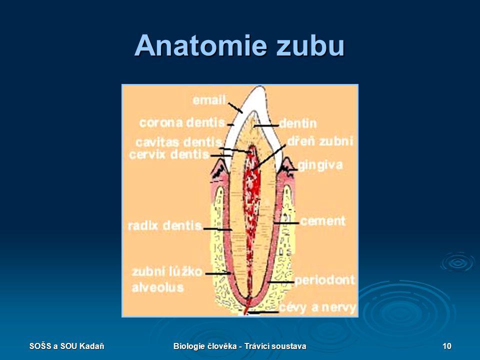 Biologie člověka - Trávicí soustava