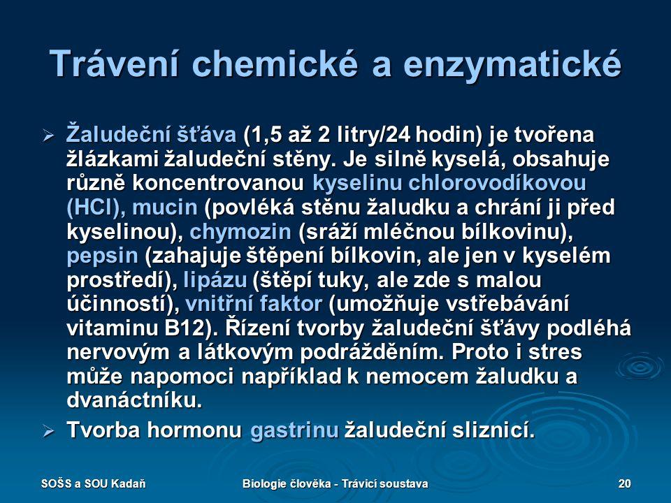 Trávení chemické a enzymatické