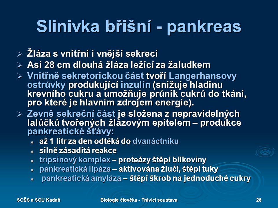Slinivka břišní - pankreas