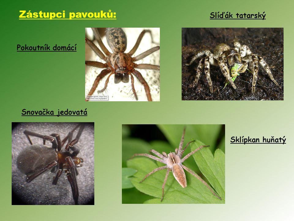 Zástupci pavouků: Slíďák tatarský Pokoutník domácí Snovačka jedovatá