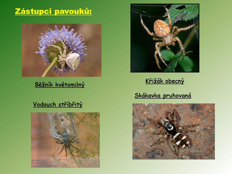 Zástupci pavouků: Křižák obecný Běžník květomilný Skákavka pruhovaná