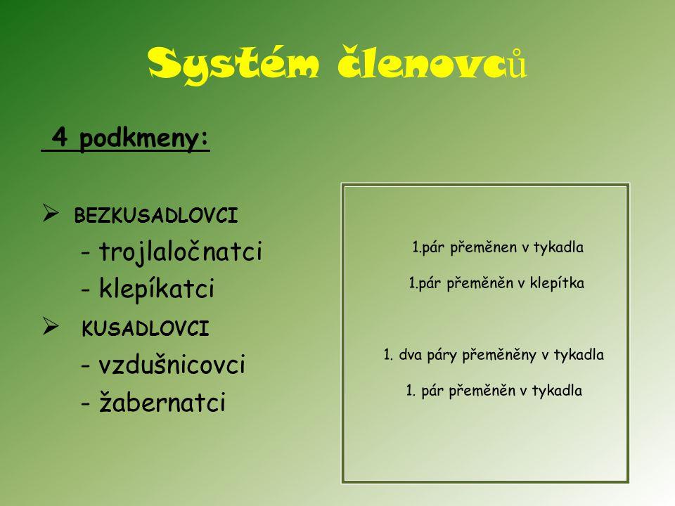 Systém členovců 4 podkmeny: BEZKUSADLOVCI - trojlaločnatci