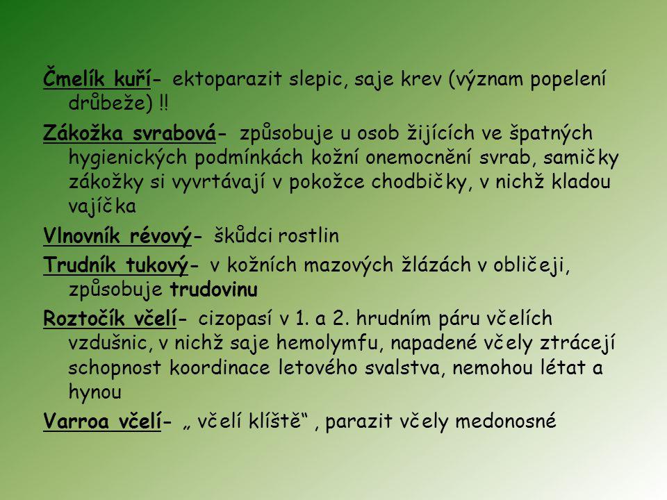 Čmelík kuří- ektoparazit slepic, saje krev (význam popelení drůbeže)