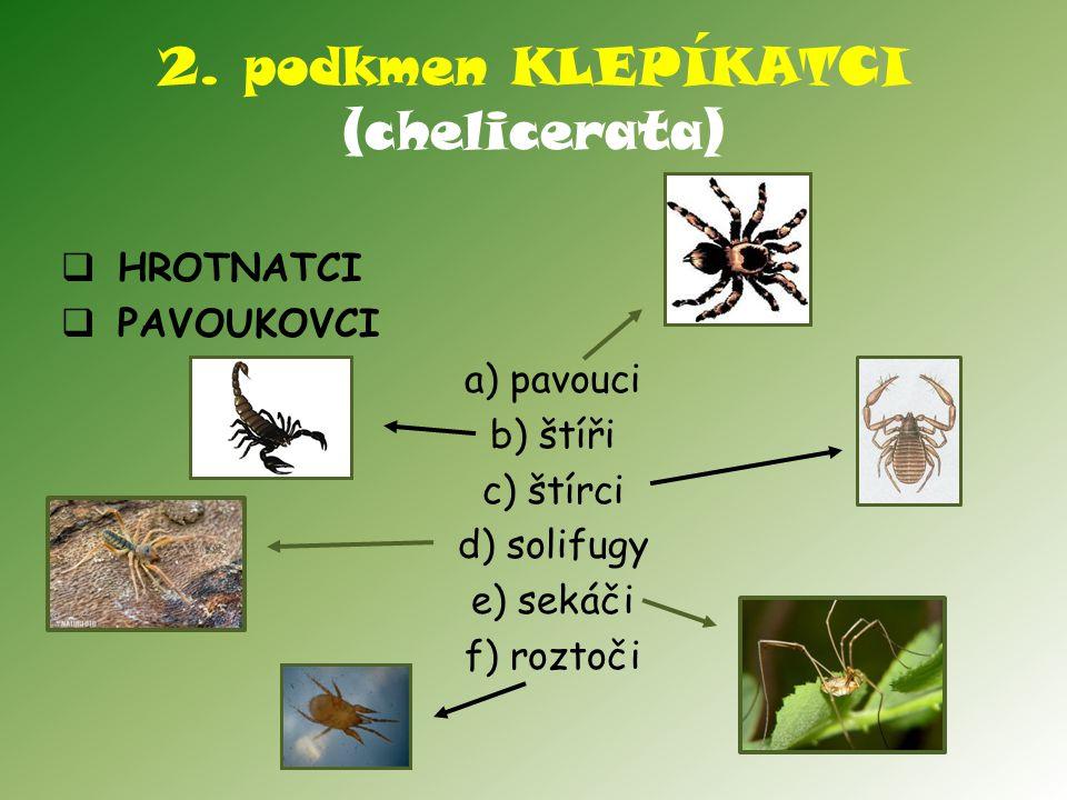 2. podkmen KLEPÍKATCI (chelicerata)
