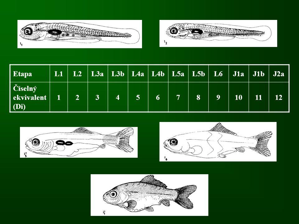Etapa L1. L2. L3a. L3b. L4a. L4b. L5a. L5b. L6. J1a. J1b. J2a. Číselný ekvivalent (Di) 1.
