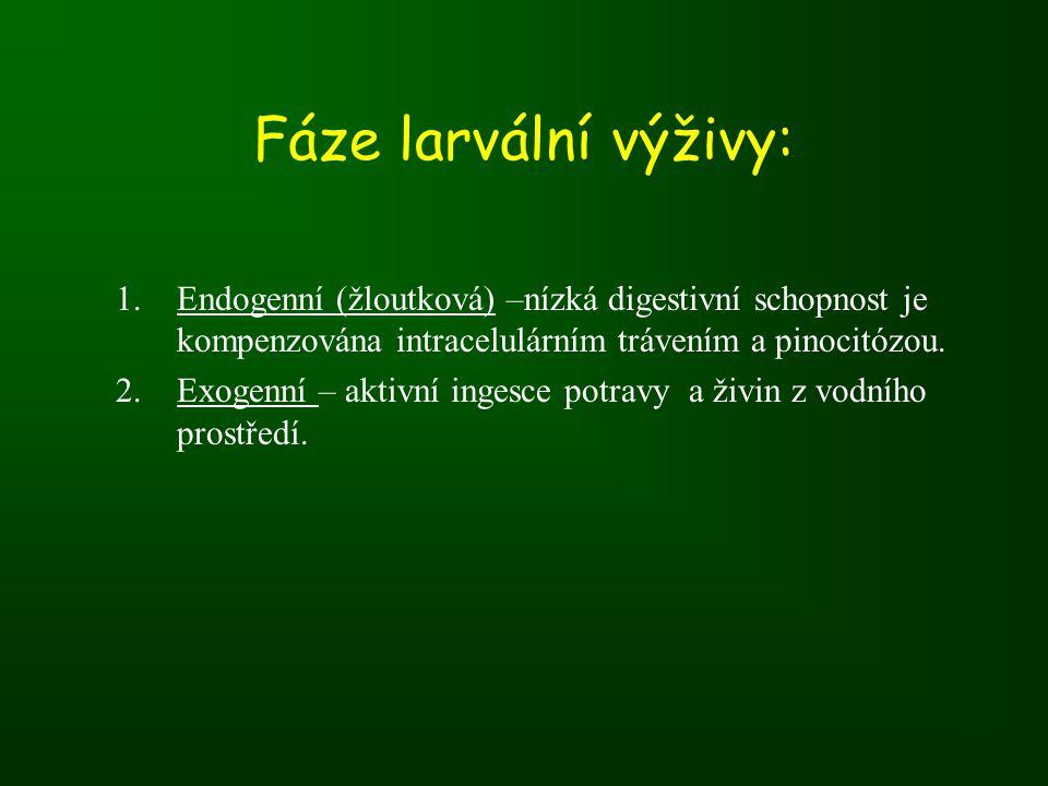 Fáze larvální výživy: Endogenní (žloutková) –nízká digestivní schopnost je kompenzována intracelulárním trávením a pinocitózou.