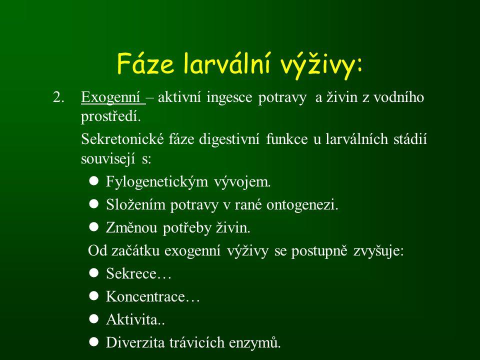 Fáze larvální výživy: Exogenní – aktivní ingesce potravy a živin z vodního prostředí.