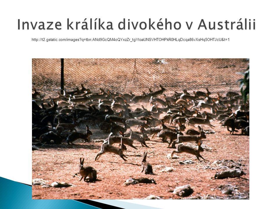 Invaze králíka divokého v Austrálii