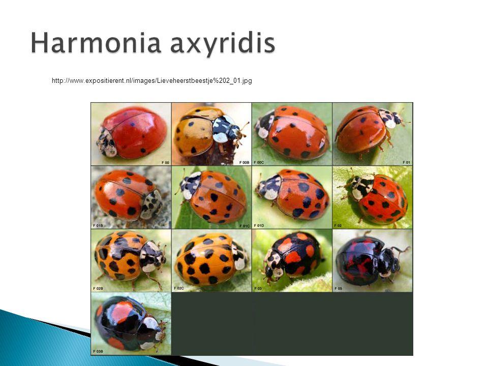 Harmonia axyridis http://www.expositierent.nl/images/Lieveheerstbeestje%202_01.jpg