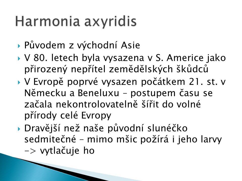 Harmonia axyridis Původem z východní Asie