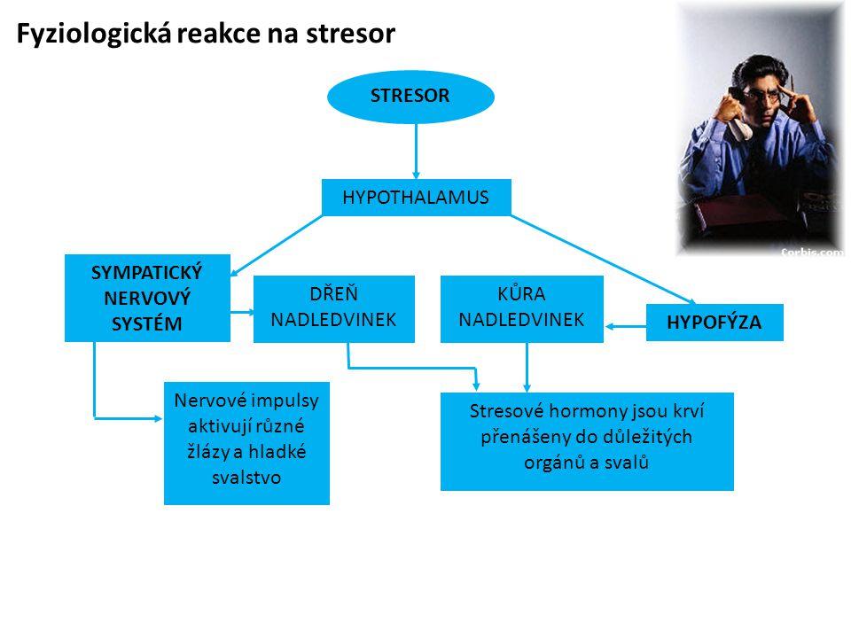 SYMPATICKÝ NERVOVÝ SYSTÉM