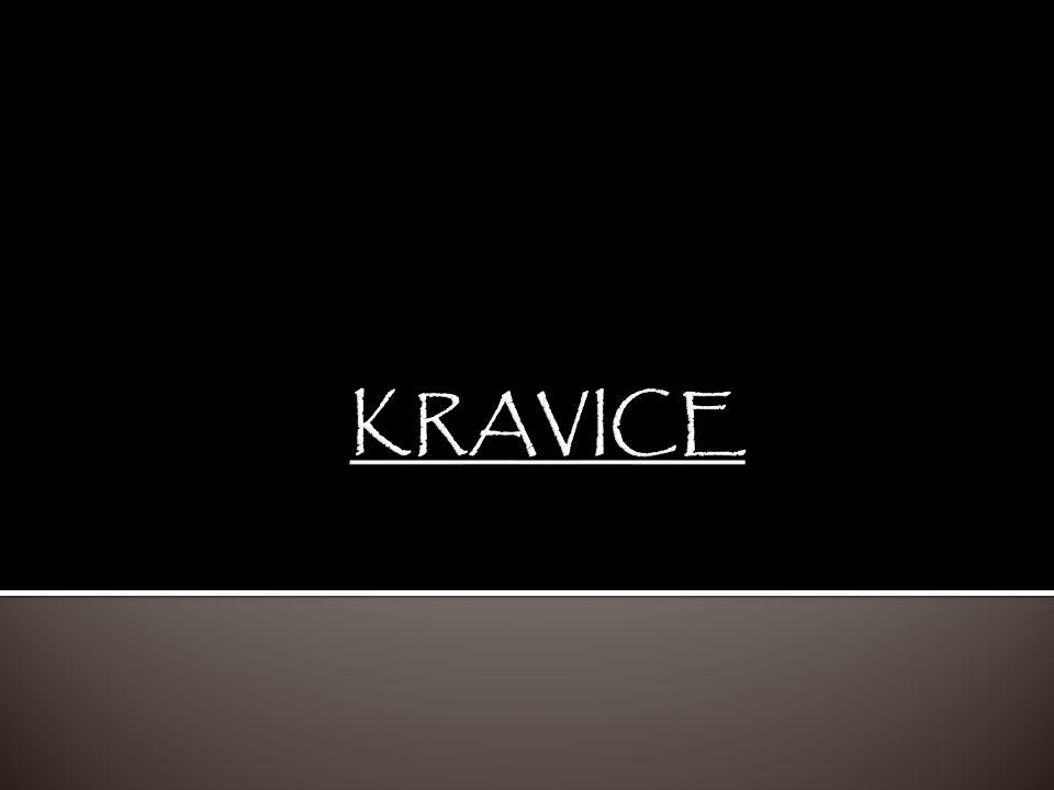KRAVICE