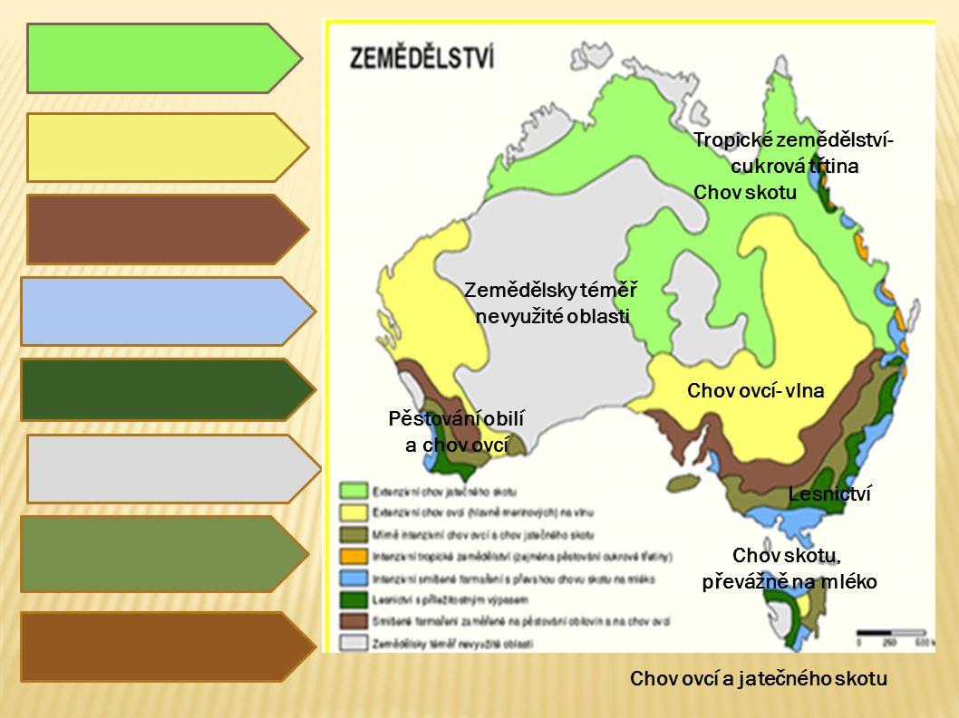 Tropické zemědělství- Chov ovcí a jatečného skotu
